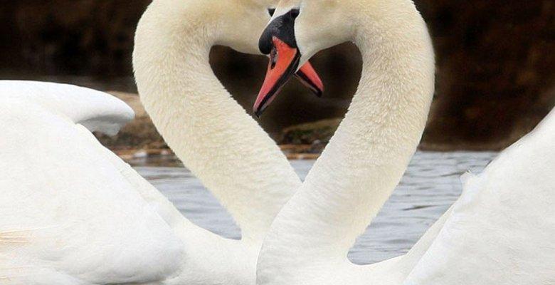 Aşk Söz ve Mesajları