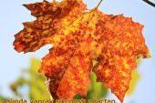 Sonbahar Sözleri ve Şiirleri