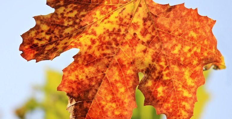 Sonbaharlı Sözler ve Şiirler