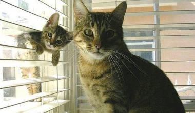 Kedilerle İlgili Sözler