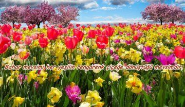 Baharla İlgili Sözler