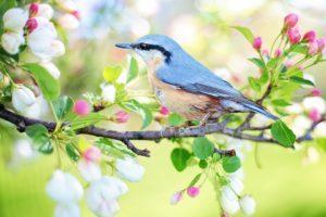 Nisan Ayı Ile Ilgili Sözler Muhteşem Sözler