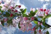 Nisan Ayı ile İlgili Atasözleri