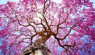 Mayıs Ayı ile İlgili Sözler