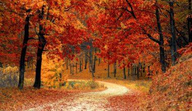 Ekim Ayı Sözleri