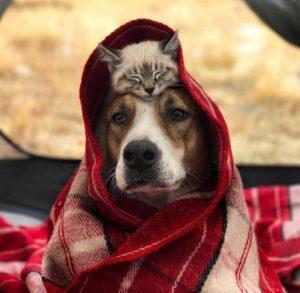 4 Ekim Hayvanlari Koruma Gunu Mesajlari Muhtesem Sozler