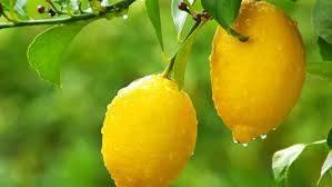 Limon İle İlgili Sözler