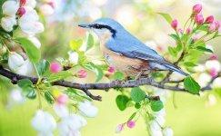 Kuşlar ile İlgili Sözler