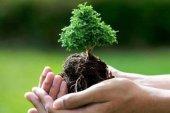 Milli Ağaçlandırma Günü Mesajları