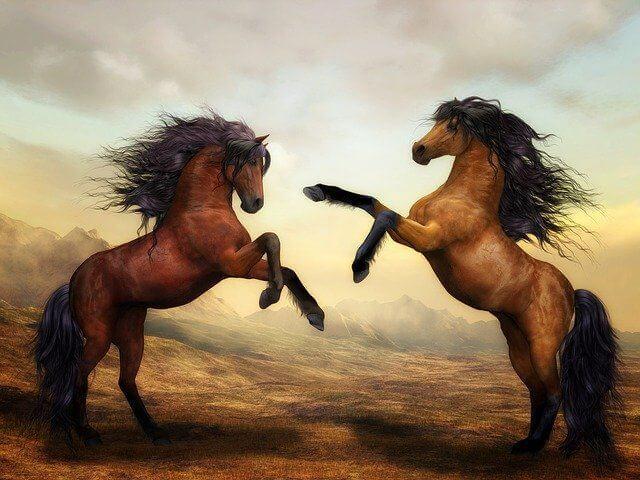 At ile İlgili Sözler
